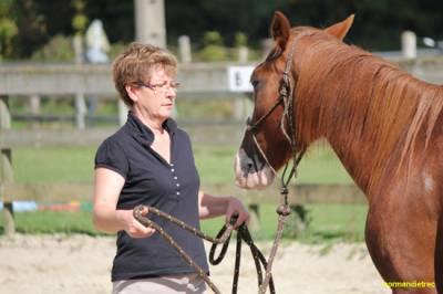 leçon d'equitation comportementale