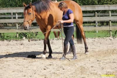 danser avec son cheval