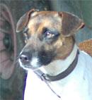 Ubu chien, le marathonien du Mont-criquet